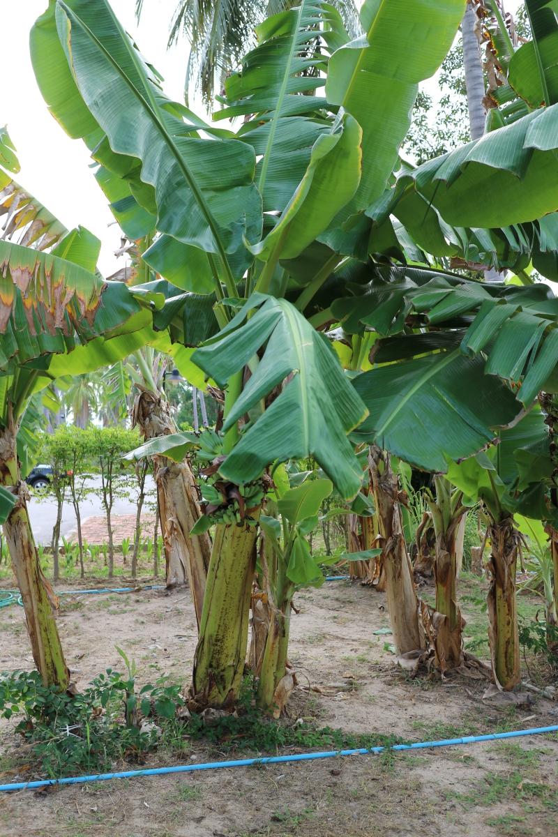 eco farm sheet